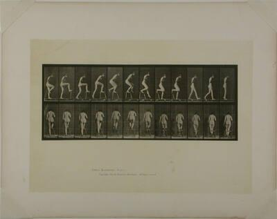 Animal Locomotion, Plate #180
