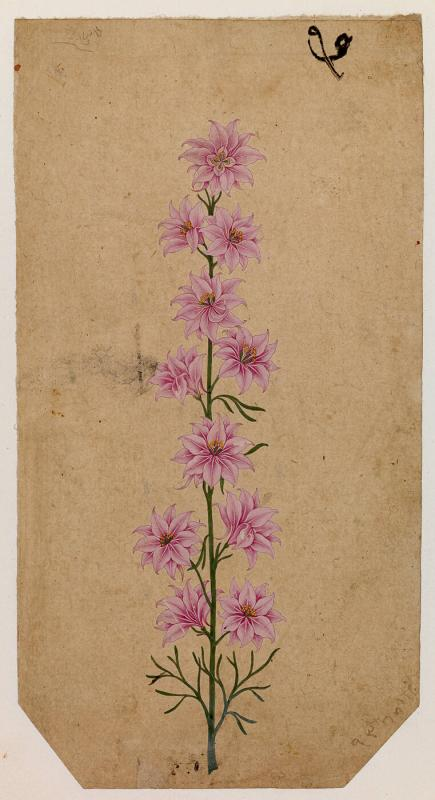 A Tall Flower with Pink Blossoms