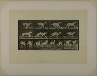 Animal Locomotion, Plate #707
