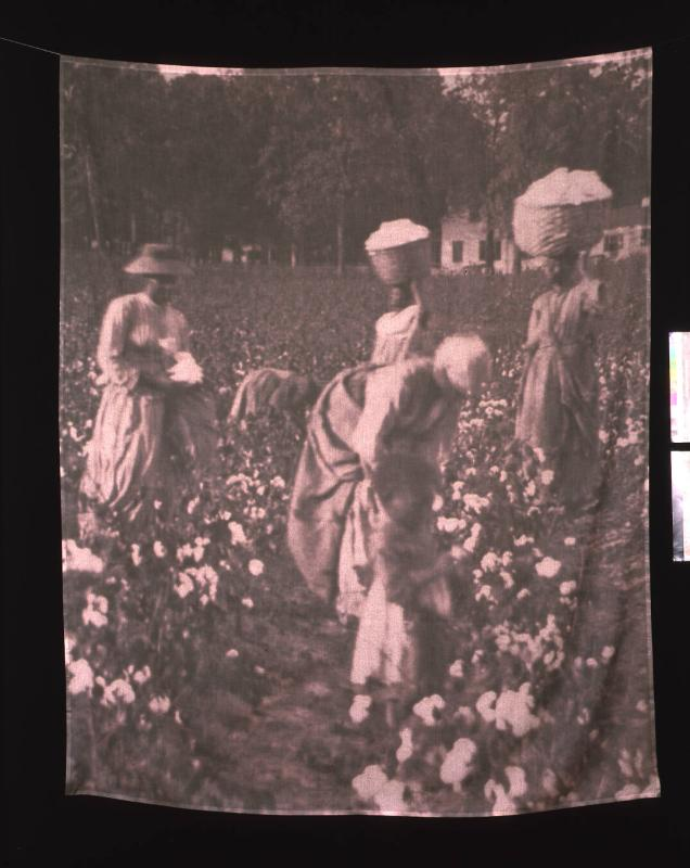 "Cotton Picking (from ""The Hampton Project"")"