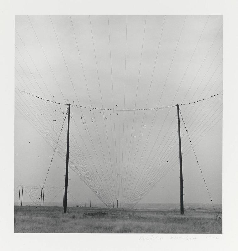 Untitled (Wires)