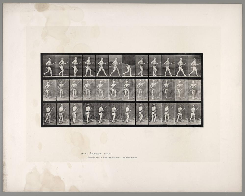 Animal Locomotion, Plate #359