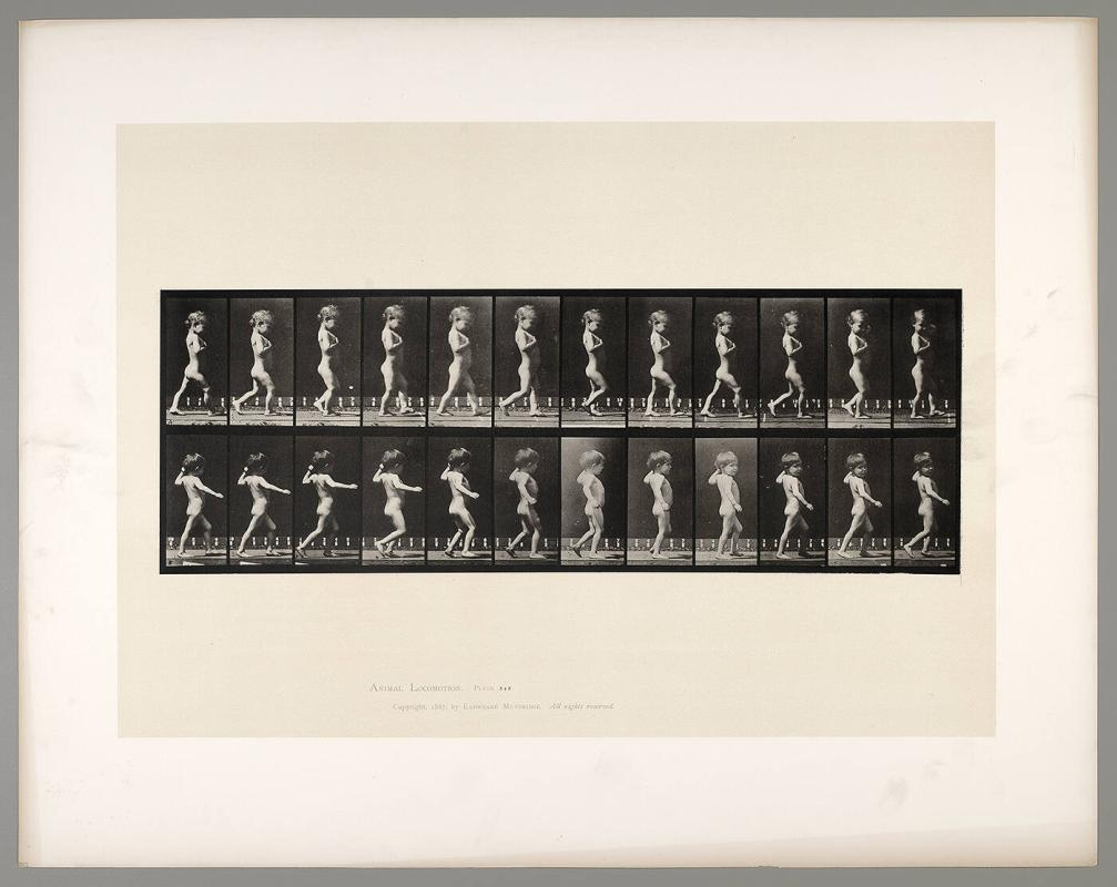 Animal Locomotion, Plate #540