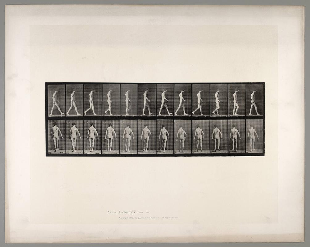 Animal Locomotion, Plate #546