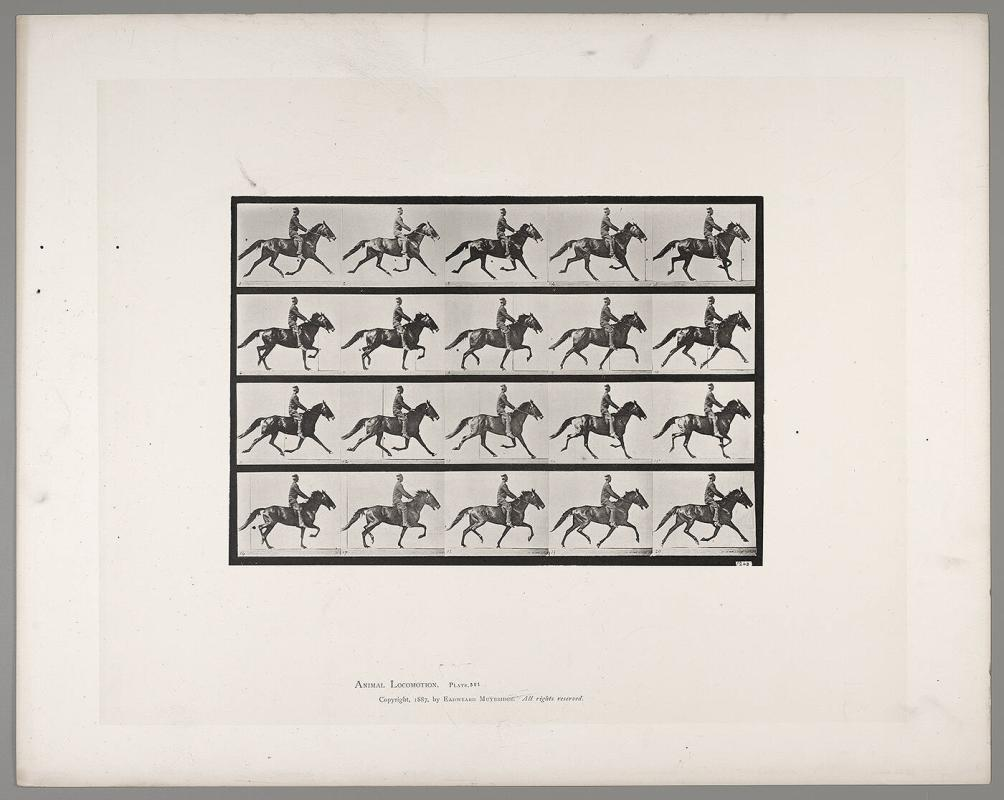 Animal Locomotion, Plate #591