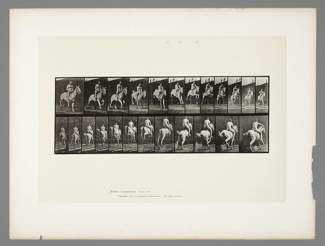 Animal Locomotion, Plate #646
