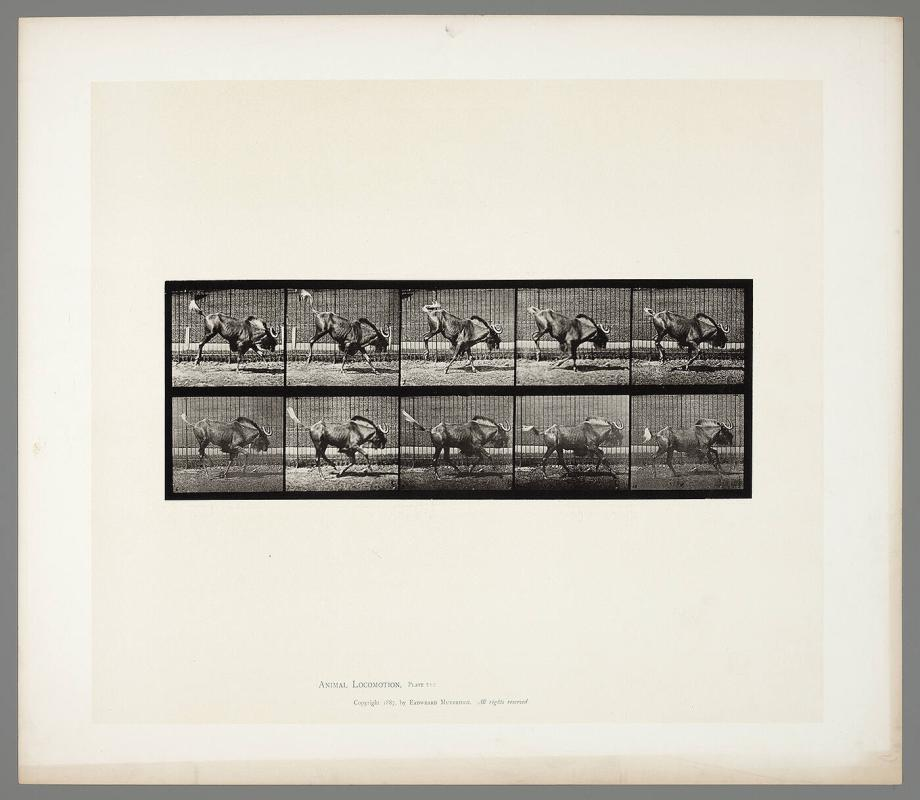Animal Locomotion, Plate #702