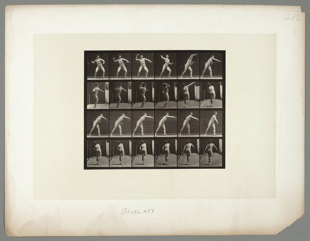 Animal Locomotion, Plate #286
