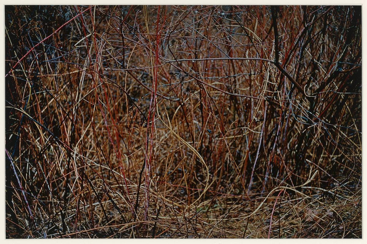 "Straw and Bramble, Redding, CT (from ""Color Nature Landscapes I"")"