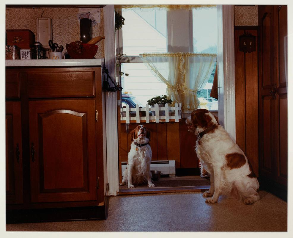 Untitled [Two Dogs]