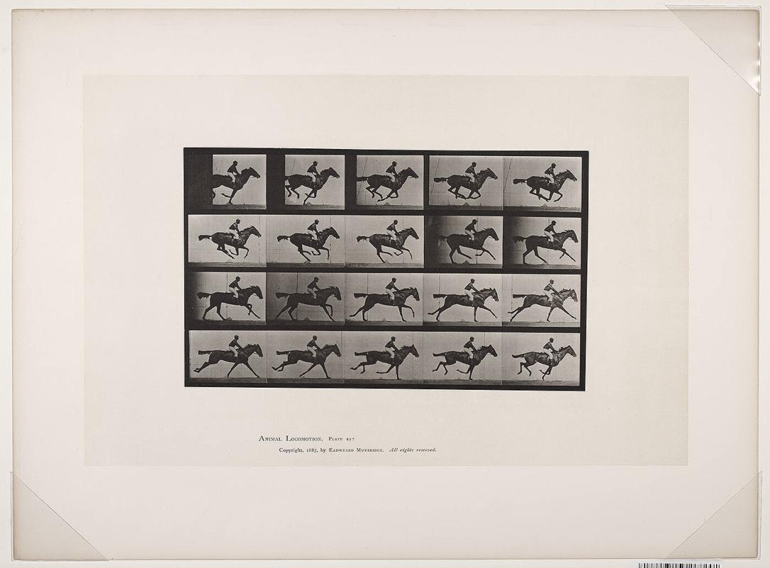 """Annie G."" galloping, Animal Locomotion, Plate #627"