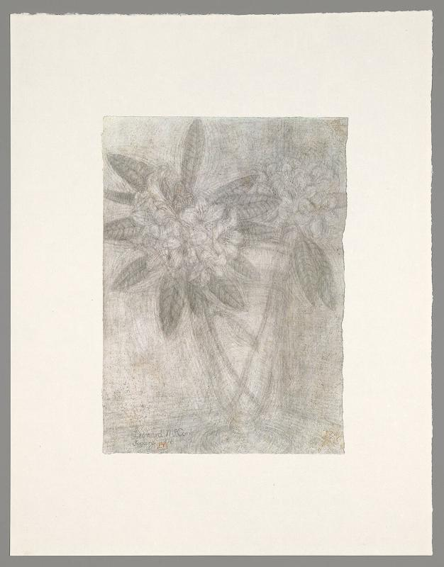 "Untitled (from ""Blossoms and Flowers"")"